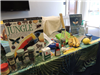 Display table with Jungle book